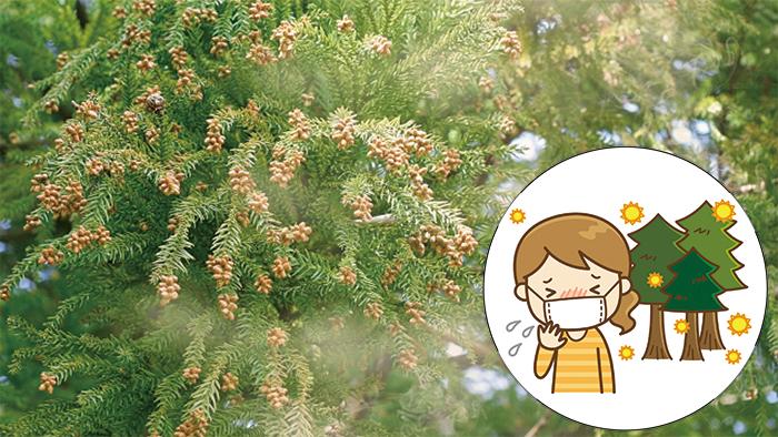 症 効く 性 食べ物 に 花粉 即効
