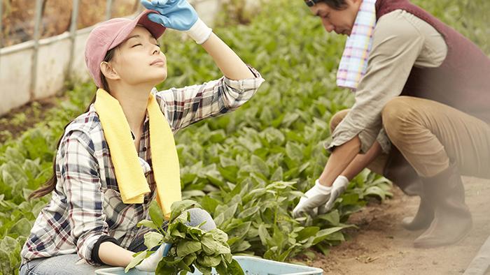 農家の嫁もいいかも?家族で楽しむ農業と女性のライフスタイル