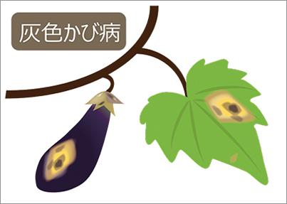 の 病気 茄子 葉・新芽の症状 症状から探す 病害虫ナビ