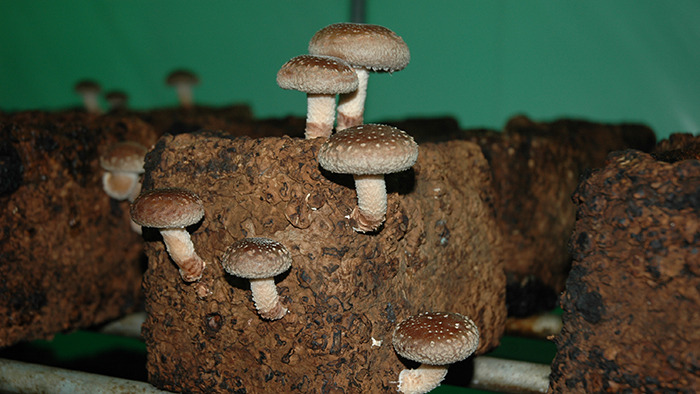 キノコ菌床で堆肥作り!作り方や材料は?農家の事例紹介 | 施設園芸.com