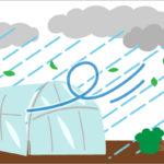 台風からパイプハウスを守る!今から出来る対策とは?